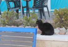 gatos Diario de Alicante