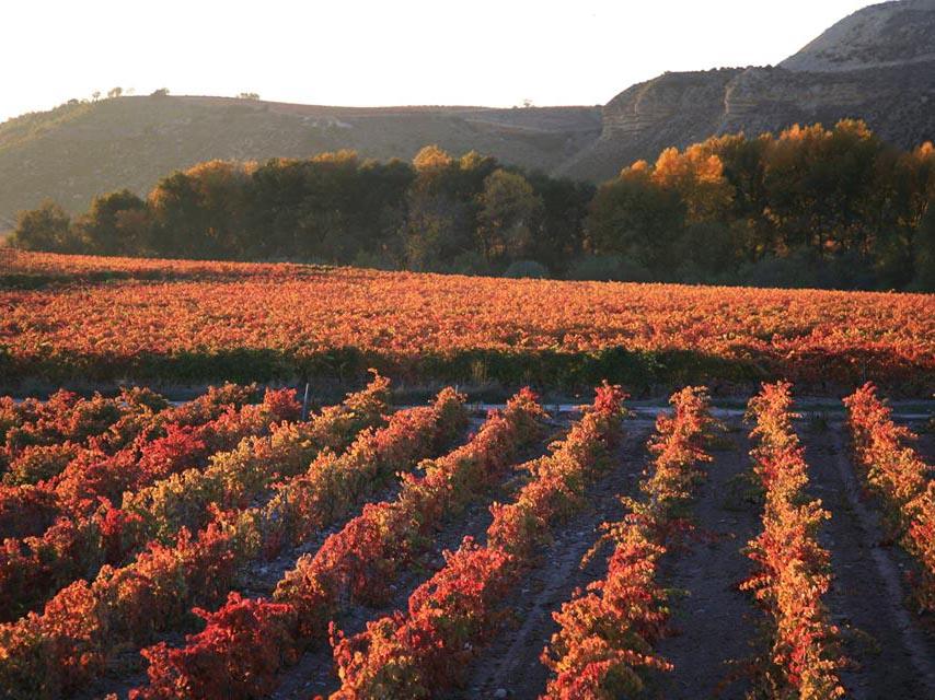 Vinos de pueblo y de zona lo ltimo de Rioja  Diario de