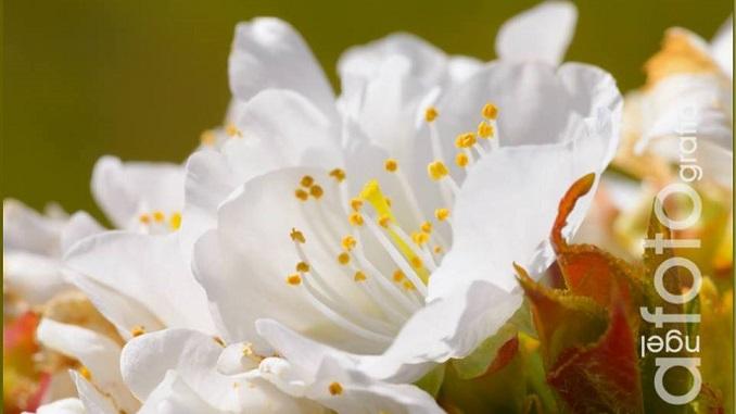 Primavera Verata entre fuego y flores