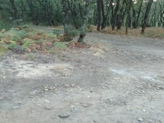 """Limpieza del Cerro de las Cabezas por el """"Colectivo por la Vera Izquierda"""""""