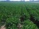 Ayudas para los jóvenes agricultores de Extremadura