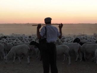 El Pastor de Jonathan Cenzual Burley | Filmoteca de Extremadura y Cineclub El Gallinero