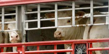 modificaciones, transporte, animales, garantizar, abastecimiento,