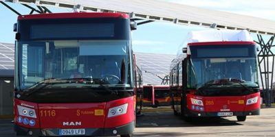Tussam, amplía, renovación, flota, autobuses,