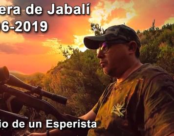 Espera de Jabalí 29-06-2019. Los corzos!. Caza
