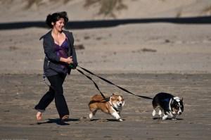 Woman runs two Pembroke Welsh Corgi dogs on Morro Strand State B
