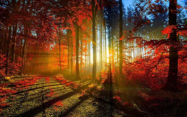 121464__forest-trees-road-leaves-autumn-sun-light-rays-dawn-sunset_p_630x394