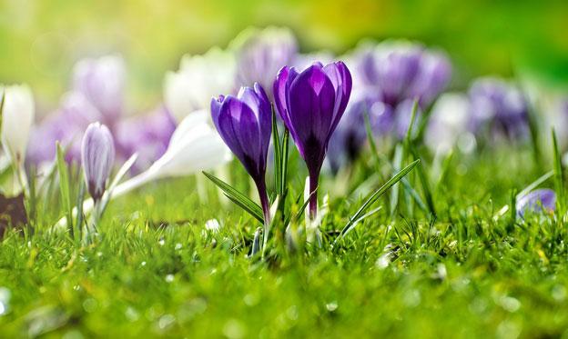 flower-316779_1280
