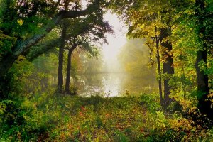 Amanecer nature