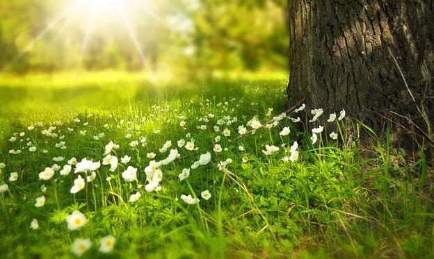 spring flores