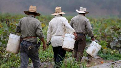 Photo of Senadores de EE.UU. piden proteger a los latinos indocumentados ante la COVID-19