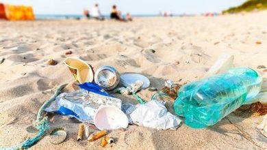 Photo of 300 quilos de lixo recolhidos em praia de Sesimbra