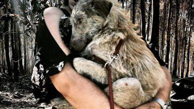 Photo of Iniciado processo de adopção dos animais do canil de Santo Tirso