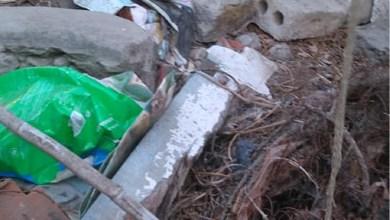 Photo of Vídeo mostra condições onde viviam animais em Almada