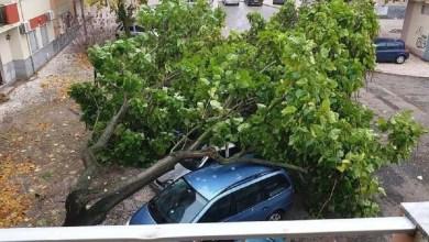 Photo of Inundações e quedas de árvores registadas por todo o distrito