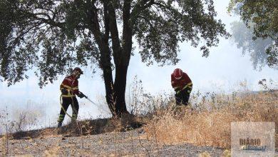 Photo of Lisboa regista dois incêndios florestais e Óbidos um em povoamento florestal