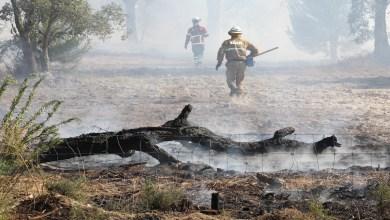 Photo of Polícia Judiciária identificou jovem de 15 anos por incêndio florestal em Mogadouro