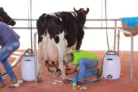 Produtores na preparação para torneio leiteiro (Foto: Divulgação)