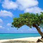 Criatividade para desconectar: a aposta da Conferência Anual de Turismo de Aruba