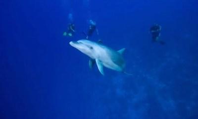 Mergulho_Polinesia_Francesa_07_16