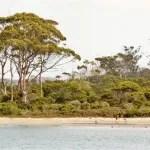 Lion, indicado ao Oscar, mostra as belezas intocadas da Tasmânia