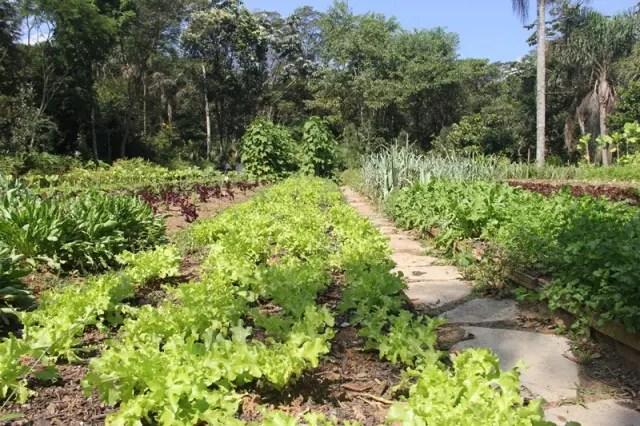 Ao lado do viveiro de mudas ergue-se uma horta bem cuidada com 13 canteiros que são adubados com composto orgânico