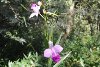 Orquídeas e bromélias margeiam a trilha