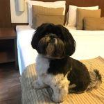 Hotéis recebem animais de estimação em sua estrutura