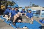 Seaworld Orlando (EUA) recebe primeiro peixe-boi resgatado em 2019