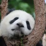 China estreia na WTM Latin America; destino é um dos mais procurados