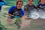 Discovery Cove anuncia nascimento de duas arraias-pintadas ameaçadas de extinção