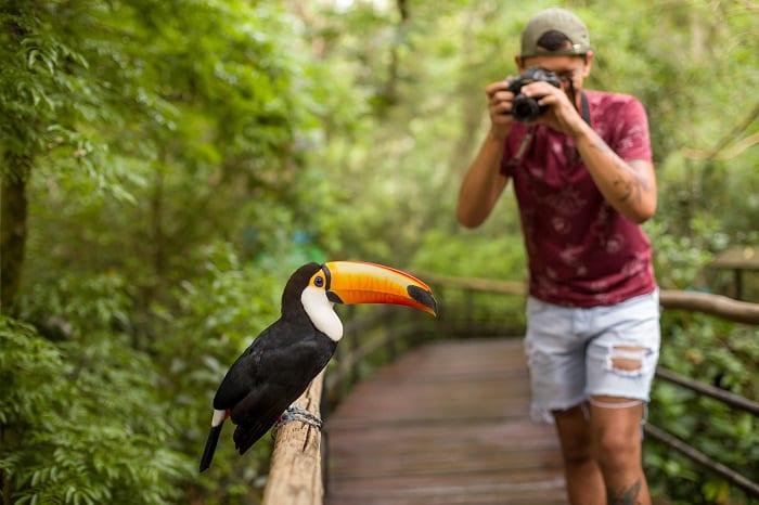 Parque das Aves, em Foz do Iguaçu, ultrapassa marca de 830 mil visitantes e bate recorde histórico