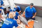 SeaWorld completa 55 anos no resgate de animais