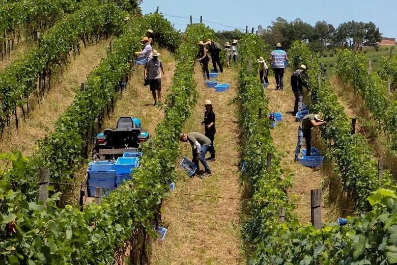 Projeto da Faccin Vinhos transforma apreciadores em vinhateiros