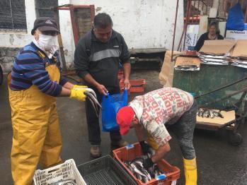 pescadores1