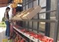 La escasez de veneno ha impactado negativamente en el precio de las frutas y hortalizas