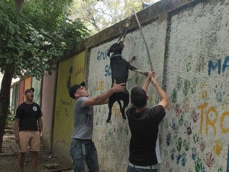 Con tres horas de ejercicios llevan a los perros a liberar toda la adrenalina