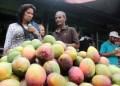 Compradores se llevan kilos de mangos por doquier