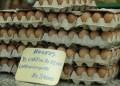 Huevos siguen aumentando cada semana. Foto: Deysi Peña