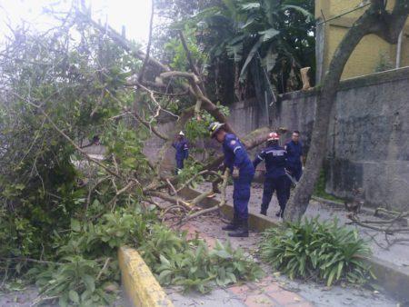 PC Los Salias retiró árbol que cayó sobre la Perimetral