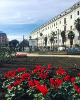 aiuole-piazza-carlo-iii-inaugurazione