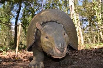 astroni dinosauri in carne ed ossa (4)
