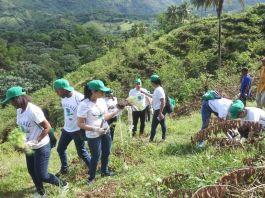 SISALRIL se une a jornada para de reforestación