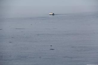 decenas-de-delfines-acompanaron-la-expedicion-por-la-bahia-de-la-herradura-16