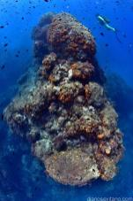 foto-premiada-en-campeonato-europeo-submarinismo-16