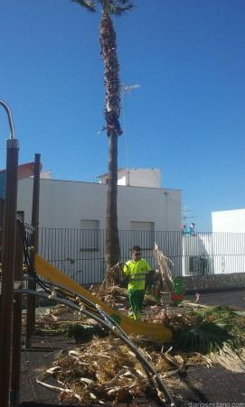 limpieza-palmeras-patio-centro-infantil-san-miguel-16-1