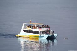 los-alumnos-disfrutaron-de-la-presencia-masiva-de-delfines-en-la-herradura-16