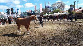 caballo expo 1