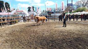 caballo expo 4