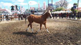 caballo expo 6